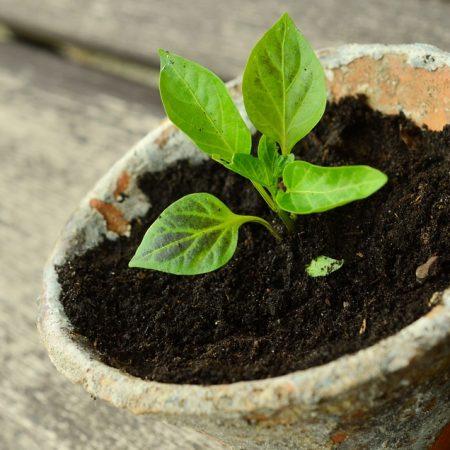 Pflanzentauschbörse  im Zukunftsraum