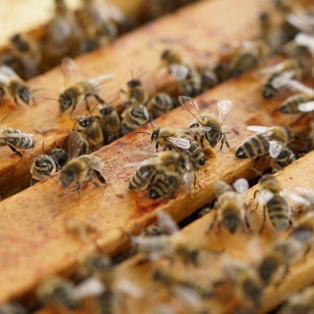 Beete & Bienen trifft sich!