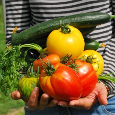 Gärtnern in der Stadt – Initiativen aus Karlsruhes Osten stellen sich vor