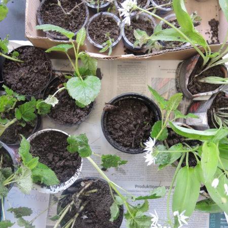 5. Pflanzentauschbörse *abgesagt*
